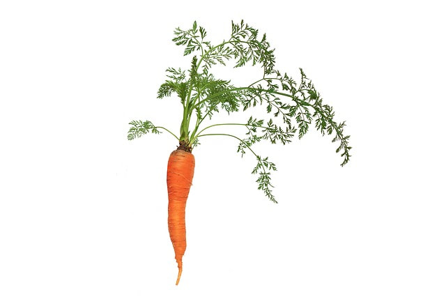 You can eat carrot tops as well